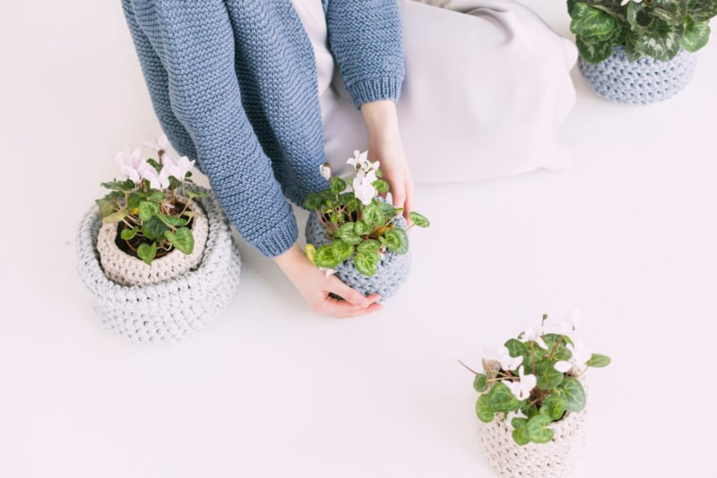 indoor plants air purifier