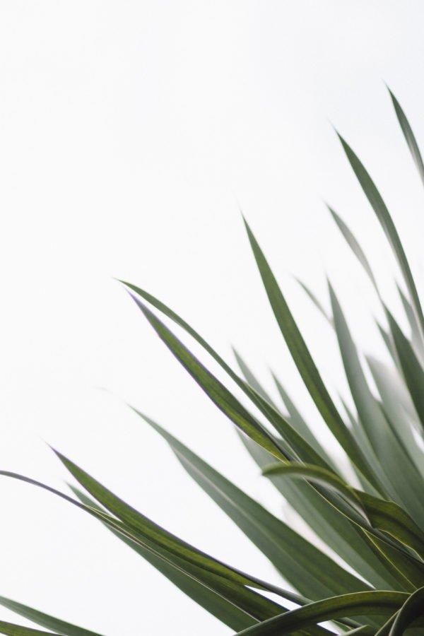 Healthy green fern plant - air purification
